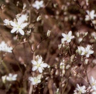 области пензенской фото лунинской